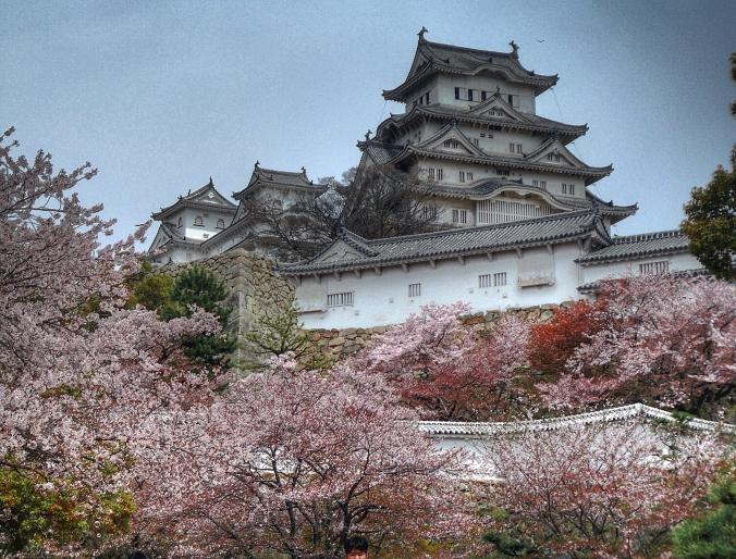 Château de Himeji et cerisiers. ©Ewan Cross