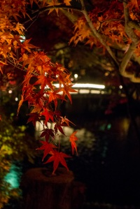 Kyoto122a