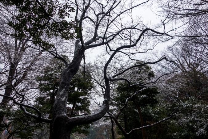 TokyoNeige5a