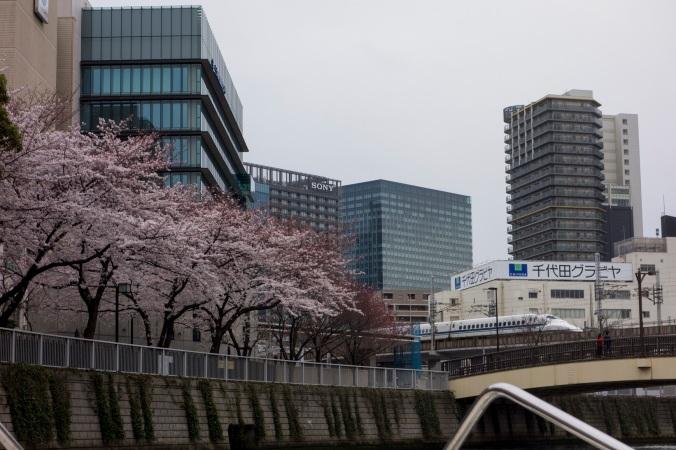 Sakura_23a