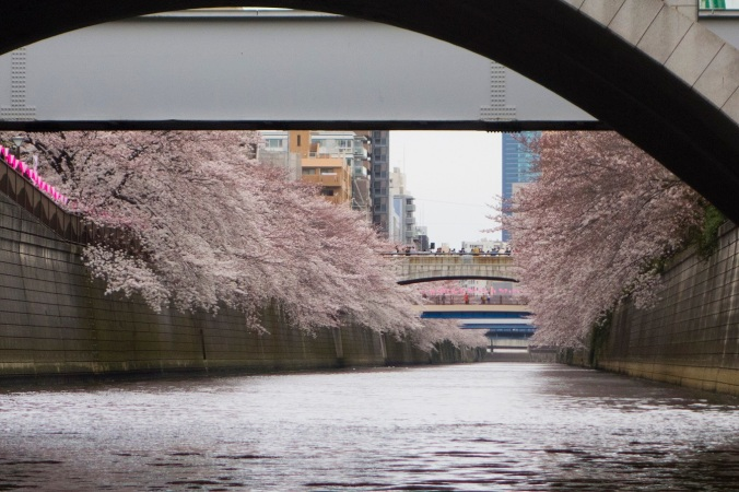 Sakura_40a
