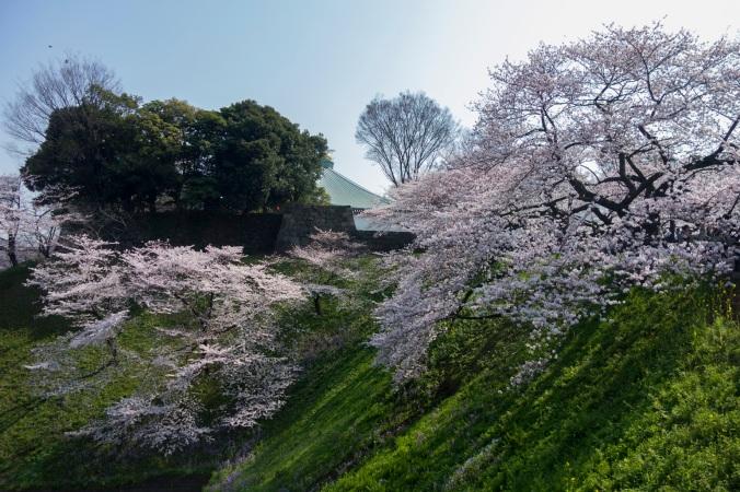 Chidorigafuchi_2a