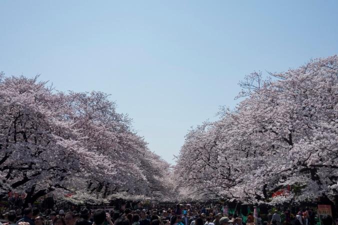 UenoSakura_36a