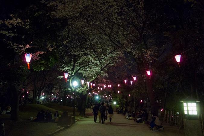 SakuraNight_0a
