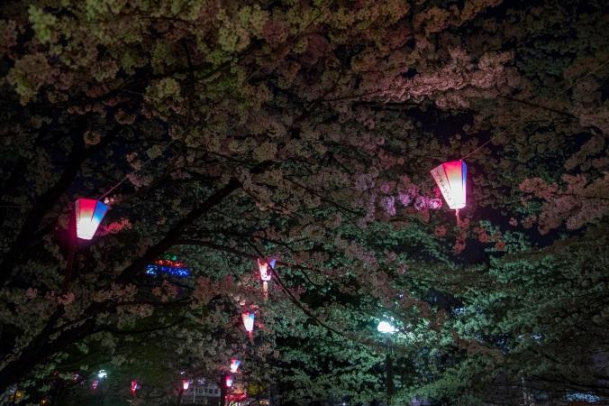 SakuraNight_10a
