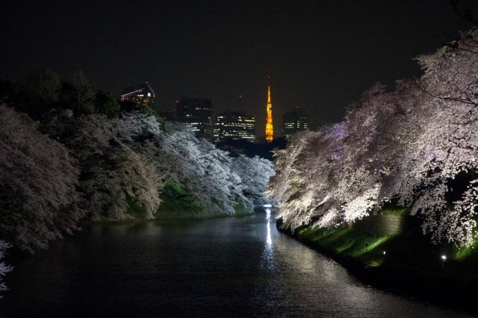 SakuraNight_19a