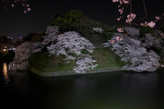 SakuraNight_22a