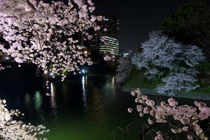 SakuraNight_26a