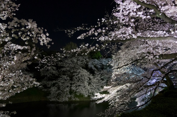 SakuraNight_31a