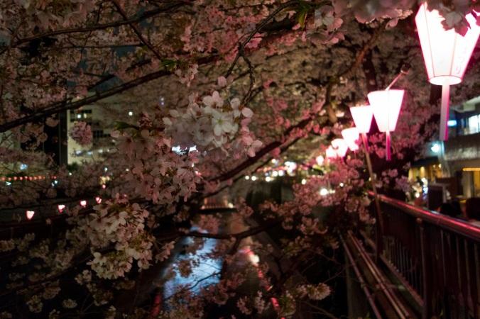 SakuraNight_36a