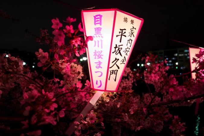 SakuraNight_43a