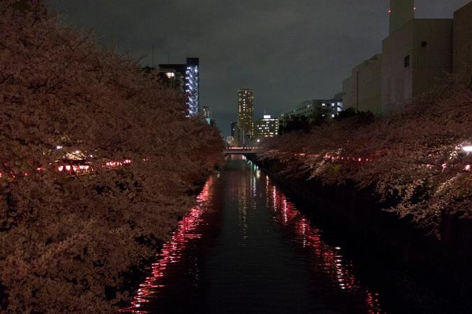 SakuraNight_50a