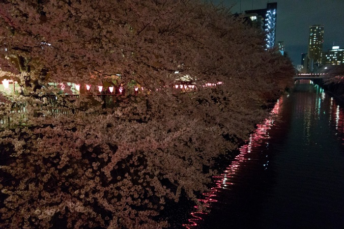SakuraNight_51a