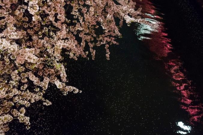 SakuraNight_52a