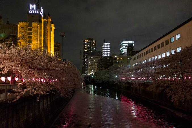 SakuraNight_54a