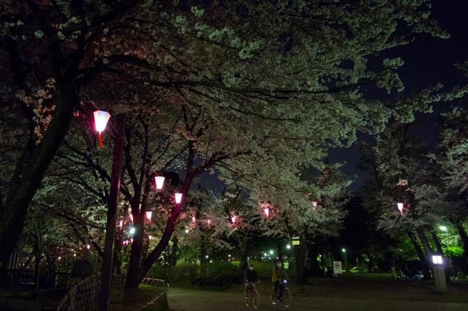 SakuraNight_9a