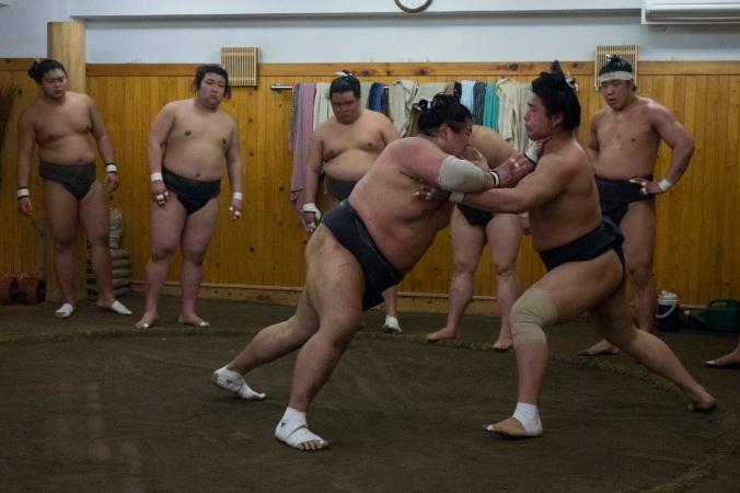 SumoFuji_2a